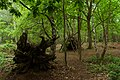 Sherwood Forest, May, 2017-3.jpg
