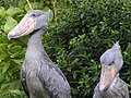 Shoebill couple1.jpg