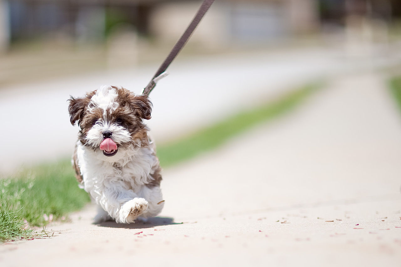 Week Dog Training