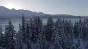 File:Sitka Spruce in an Alaskan Winter.webm