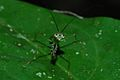 Small Mantis (Mantodea) (8538388653).jpg