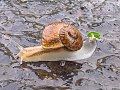 Snail-rainy-season.jpg
