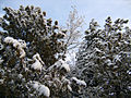 Snow in Afghanistan-colorcorr.jpg