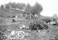 Soldaten räumen Wurzeln und Steine aus einem gerodeten Waldstück - CH-BAR - 3241215.tif