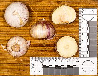 Solo garlic - Views of the bulb