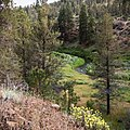 South Fork John Day Wild and Scenic River (36037385580).jpg