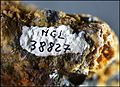 SphalériteAngleterre(Cumberland)RefMGL38827 MuséumHistoireNaturelleLille GLAM2016 Photo.F.Lamiot numéro.jpg