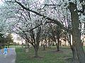 Spring in Laumeier - panoramio.jpg