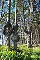 Spruce Burl trail, Kalaloch Beach, Washington 03.jpg