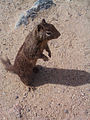 Squirrel (15622924790).jpg