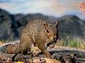 Squirrel (9659790929).jpg