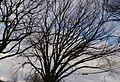 Squirrel Bridge 0003.jpg