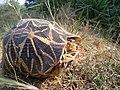 Star turtle.jpg