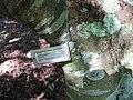 Starr-091104-9193-Melicoccus bijugatus-plant tag-Kahanu Gardens NTBG Kaeleku Hana-Maui (24361925823).jpg
