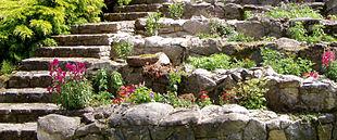 Steingartenstauden wikipedia - Kiermeier garten ...