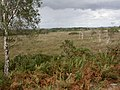 Stoborough Heath, mire - geograph.org.uk - 1473892.jpg