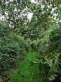 Sunken bridleway - geograph.org.uk - 546867.jpg