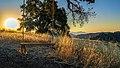 Sunrise in Towsley Canyon (35007740023).jpg