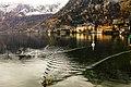 Swan Lake In Hallstatt (53948394).jpeg