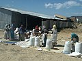TEFF CLEANING BY LOCALS AXUM UNIVERSITY, TIGRAY , ETHIOPIA.jpg