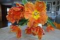 TULIPS orange (red yellow) open flower petals, in vase on table (oransje, åpne tulipaner i vase på bord) Norway 2019-02-13 3.jpg