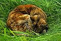 Tabby cat asleep in grass.jpeg
