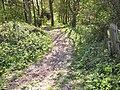 Target Plantation (1) - geograph.org.uk - 425505.jpg