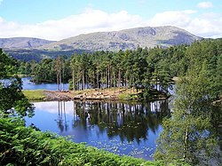 Tarn Hows - geograph.org.uk - 361546.jpg