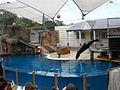 Taronga Zoo (6182490574).jpg