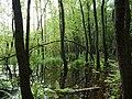 Teufelsbruch swamp next to crossing path in summer 2.jpg