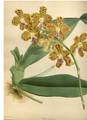 The Orchid Album-01-0047-0015.png