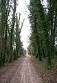 The Ridgeway (near Ham Wood) - geograph.org.uk - 1470722.jpg