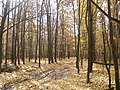 The autumn leaves... - panoramio.jpg