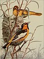 The birds of Washington; a complete, scientific and popular account of the 372 species of birds found in the state (1909) (14726984926).jpg