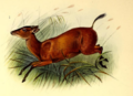 The book of antelopes (1894) Cephalophus nigrifrons.png