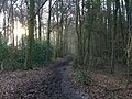 The bridleway in Littlebottom Wood - geograph.org.uk - 111206.jpg