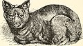 The cat, a guide to the classification and varieties of cats and a short tratise upon their care, diseases, and treatment (1895) (14577847909).jpg