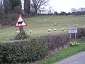 The sign says cattle - the field says sheep. Confusing. - geograph.org.uk - 716406.jpg