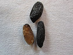 The smooth brown inside of the tonka bean.jpg