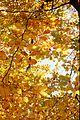 Through the leaves (7051981595).jpg