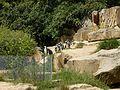 Tiergarten, Berlin, Germany - panoramio (59).jpg