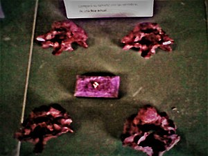 Titanoboa - Titanoboa vertebrae, exhibited in the Bogotá Botanical Garden, with a vertebra of a modern boa (center)