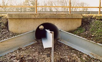 Common toad - Tunnel under road for toads, Germany