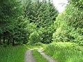 Track through Llaneglwys Wood - geograph.org.uk - 868057.jpg
