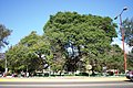 TreePlazaCoyotepec.JPG