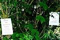 Tree operations - geograph.org.uk - 1340965.jpg