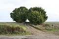Trees flourishing off Ermine Street - geograph.org.uk - 990395.jpg