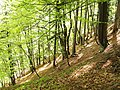 Triglav National Park2.jpg