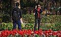 Tulip flowers in Tehran's parks, Nowruz 2018 (13961228001128636570940736891400 68489).jpg