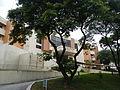 UPDilimanDepartmentofComputerSciencejf3732 07.JPG